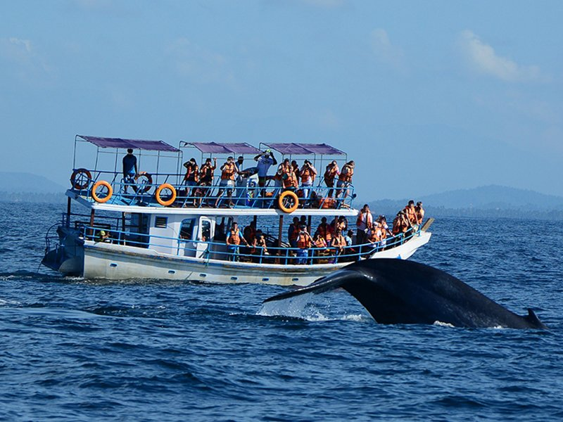 Whale-Dolphin-Watching