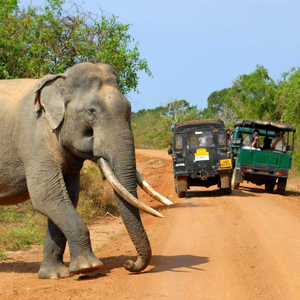 Yala National Park 1