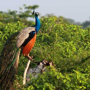 Yala National Park 2